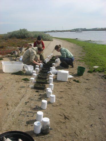 Sampling mesocosms Werribee River